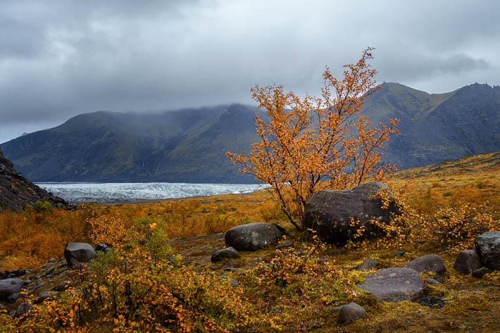 island - gletscher - Svínafellsjökull im herbst