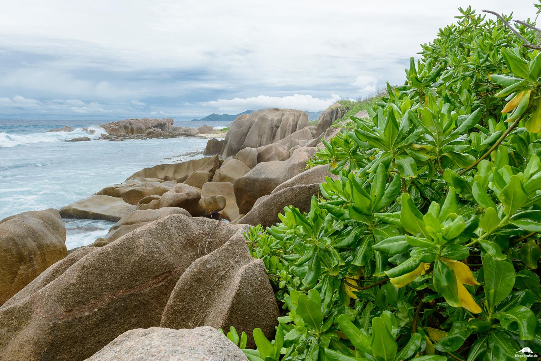 seychellen-la-digue-anse-aux-cedres