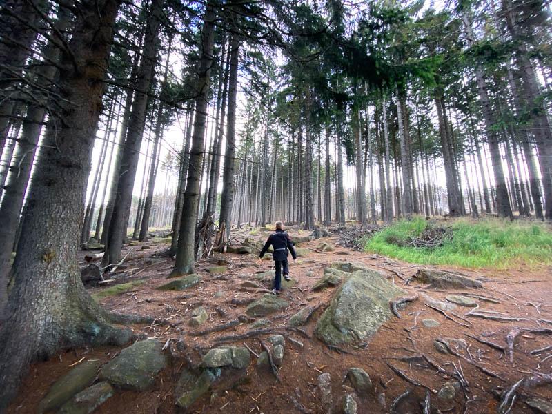 Weg zur Feuersteinklippe in Schierke