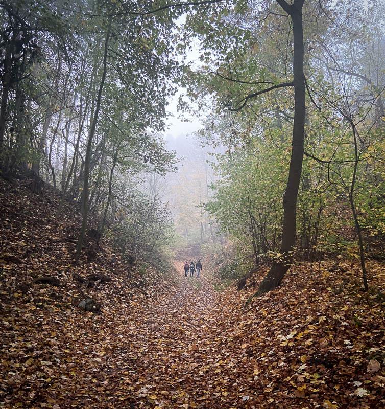 Wanderweg in den Klusbergen bei Halberstadt