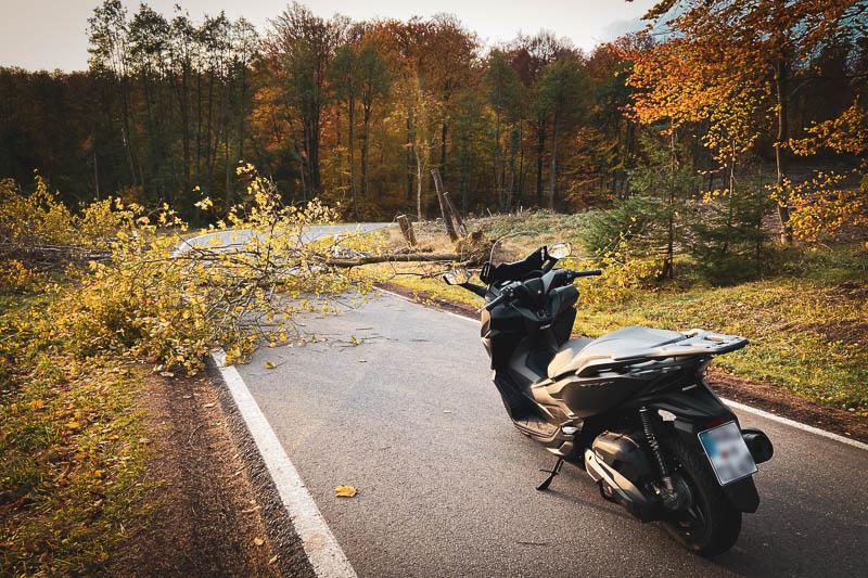 Umgekippter Baum im Harz auf der Straße