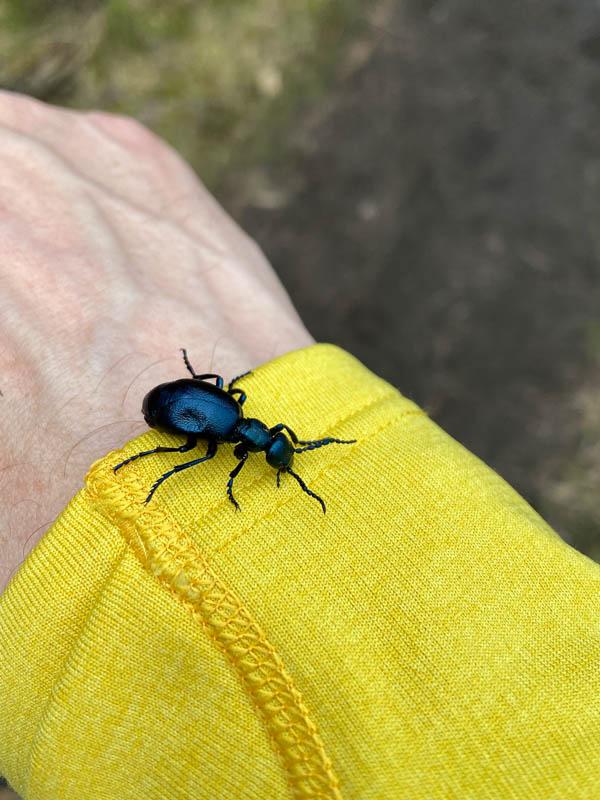 Ein Käfer auf meinem Arm