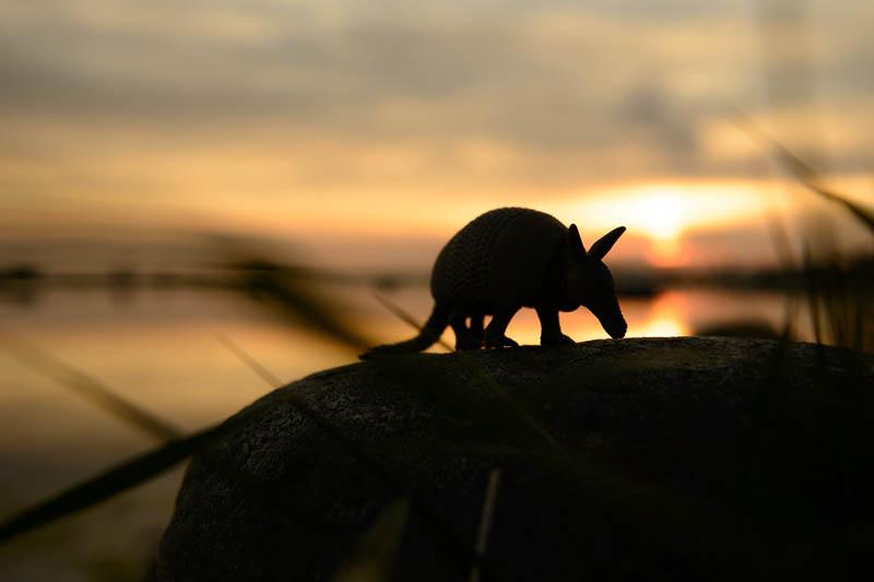 Das Gürteltier zum Sonnenuntergang in Rerik