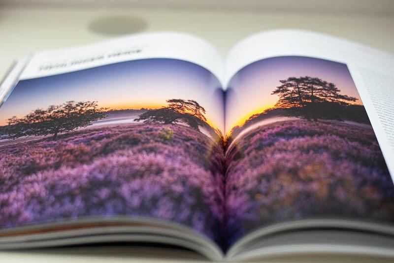 Heideblüte in der Mehlinger Heide im ZIELFOTO-Magazin Fotografieren in Pfälzerwald und Schwarzwald
